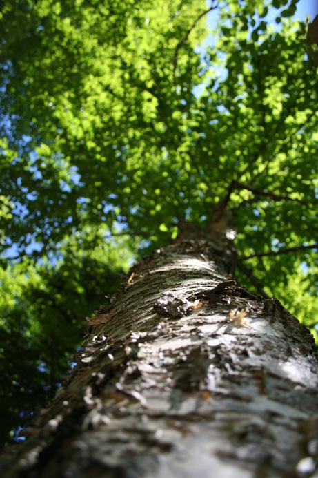 Développement durable Maitrise de l'impact environnemental